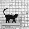 Street art graffiti black cat