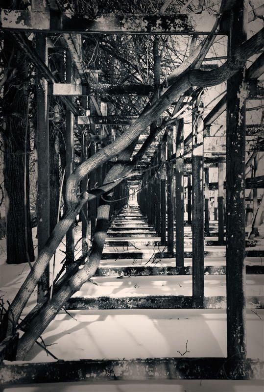 tree trunck in metal square frames ствол дерева в железных прямоугольных рамках автор Демидов Игорь