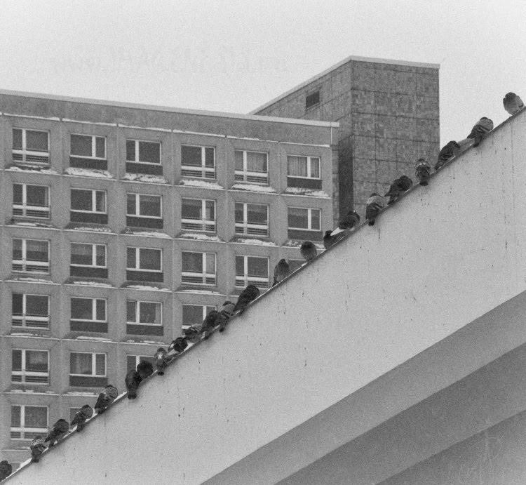 rows of windows diaginal of birds ряды окон диагональ птиц автор Демидов Игорь