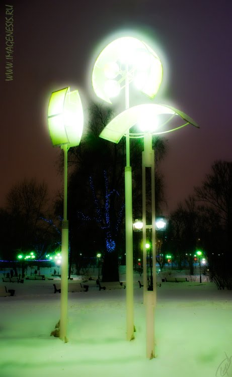 street lamp phosphorescent mushrooms Фосфоресцирующие грибы фонари автор Демидов Игорь