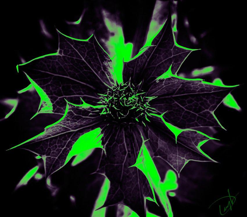 dark flower violet green spikes темный цветок фиолетово зеленый колючка автор Демидов Игорь