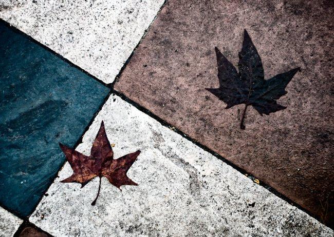 листья лежат на мокрых плитках мостовой простая геометрия автор Демидов Игорь fallen leaves on wet pavement simple geometry