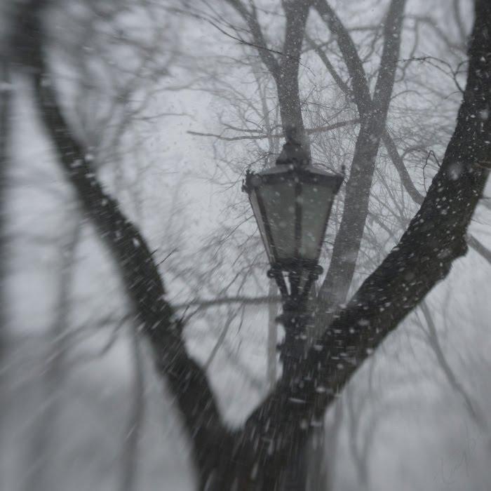 снегопад на аллеях старого парка фонарь снежинки ветер автор Демидов Игорь snowfall park trees street lamp snow flakes