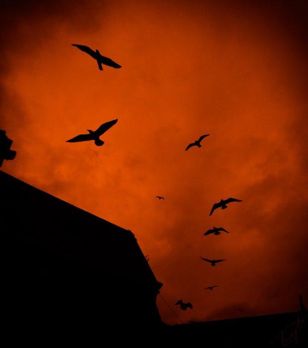 Чёрные птицы на красном багровом небе облака силуэты автор Демидов Игорь black birds on crimson skies red clouds