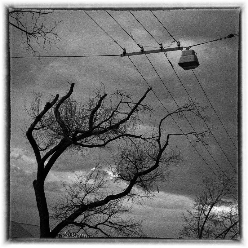 cuted brunches darkened sky wires обрезанные ветви, тёмные небеса рассекаемые проводами фонарь автор Демидов Игорь