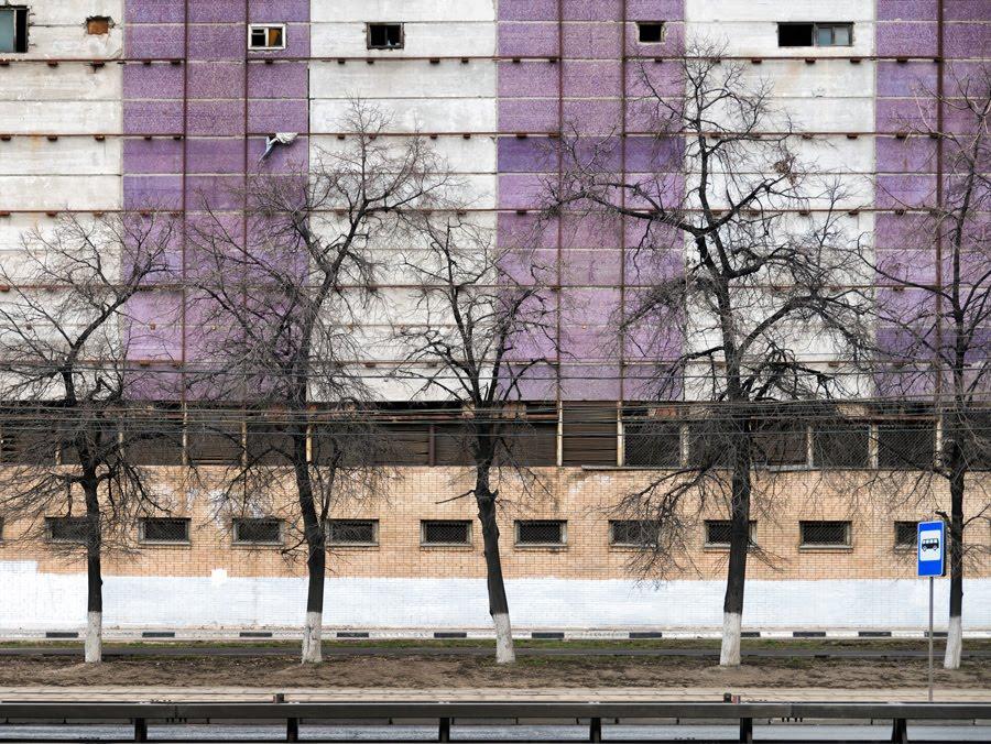 purple rhytm wall street trees windows фиолетовый ритм стена полосы окна деревья улица автор Демидов Игорь