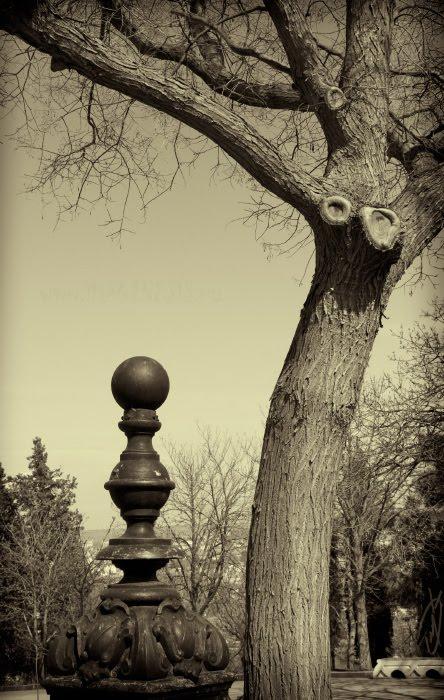 tree branches decorative cast-iron pillar дерево ветви чугунный декоративный столбик автор Демидов Игорь