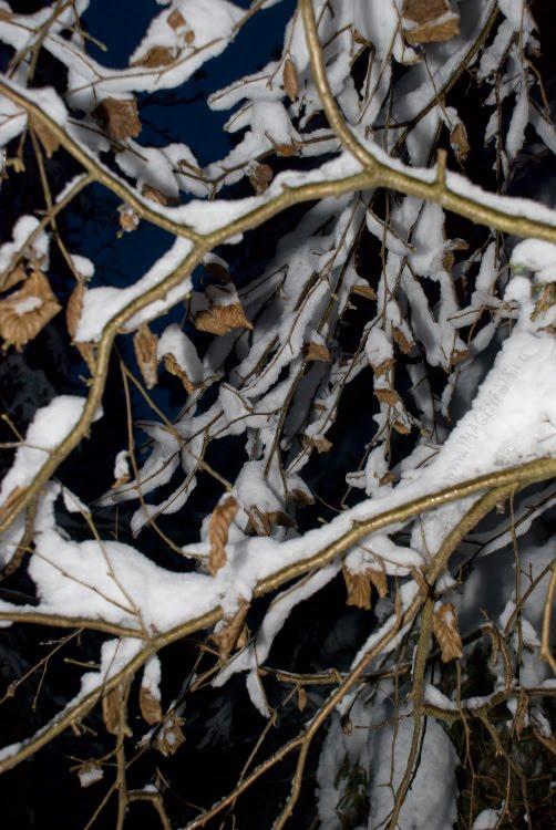 golden leaves and branches in the night золотые листья и ветви как на Сецессионе автор Демидов Игорь