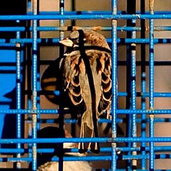 воробей сидит на солнце чёрный крест тени автор Демидов Игорь sparrow sitting in the sun shadow cross