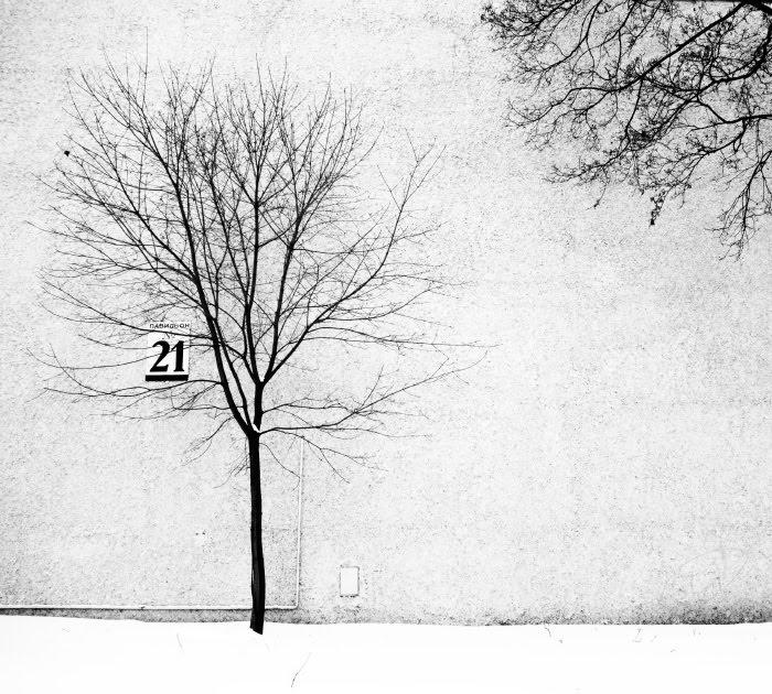 21 эстетика голых деревьев стена белая снег зима голые ветви деревьев автор Демидов Игорь winter naked trees branches graphic aesthetic