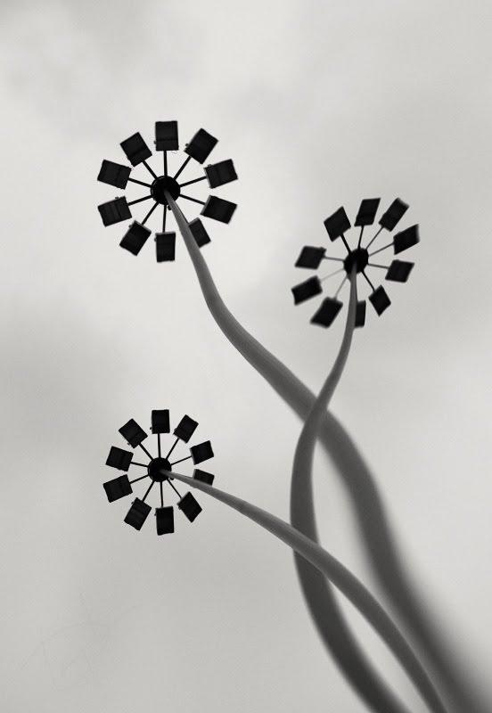 фонари согнуты как металлические цветы автор фото Демидов Игорь metal flowers made of bended street lamps