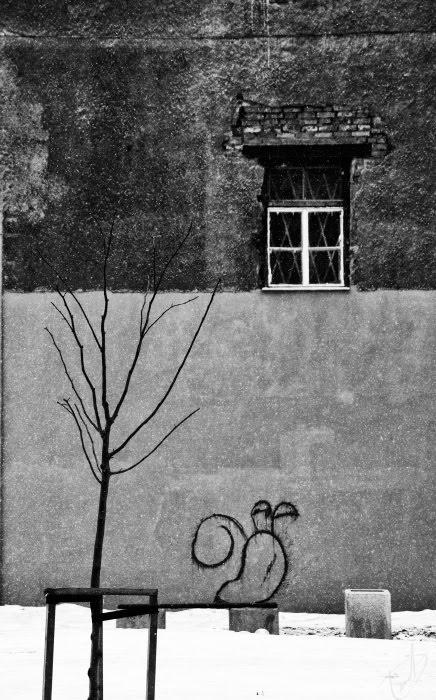 Стена окно дерево снег скамейка улитка чёрнобелая фотография автор Демидов Игорь black white photo of snail in snow of st Pitersburg