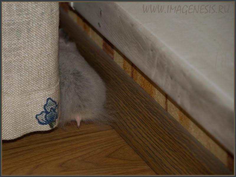 hamster pink tail розовый хвостик хомяка автор Демидов Игорь