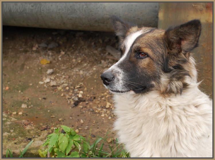 dog пёс Бублик автор Демидов Игорь