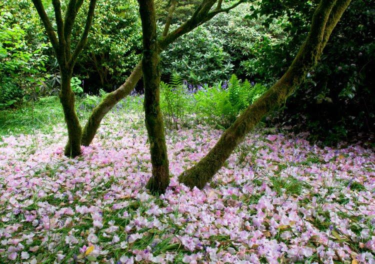 ковёр на земле из розовых лепестков стволы во мхе автор Демидов Игорь petal carpet on the green grass