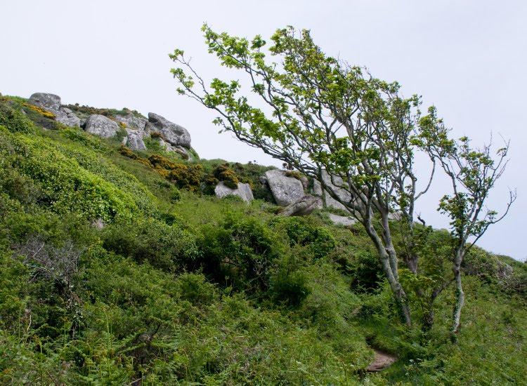 Дерево согнутое ветром на склоне скал автор Демидов Игорь tree bent by the wind on the cliffs