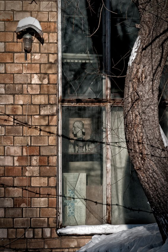 пыльные полки гипсовый бюст солнечный свет ствол дерева автор Демидов Игорь dusty shelves gypseous bust sunlight through dirty window