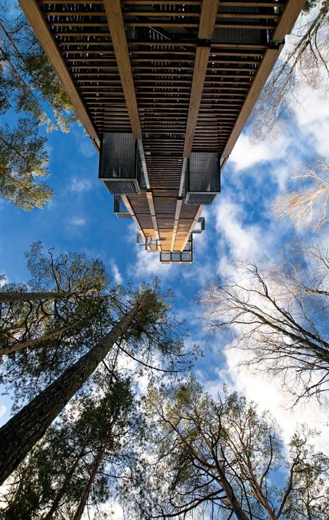 высокая башня голубое небо стволы деревьев солнечный день автор Демидов Игорь tall tower high trees blue skies