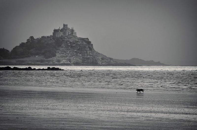 black dog Saint Micharl mountain Cornwall cliff beach low tide чёрный пёс бежит по дну моря в отлив на скале святого Михаила замок автор Демидов Игорь