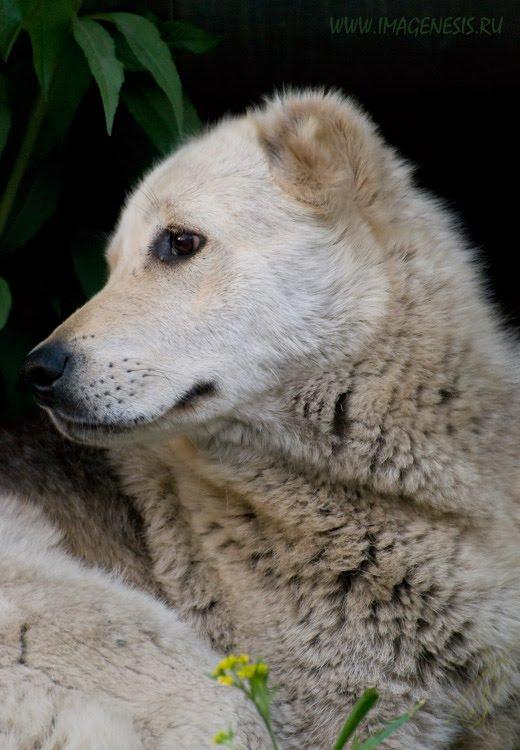 dog portrait портрет гаражной собаки туристки автор Демидов Игорь