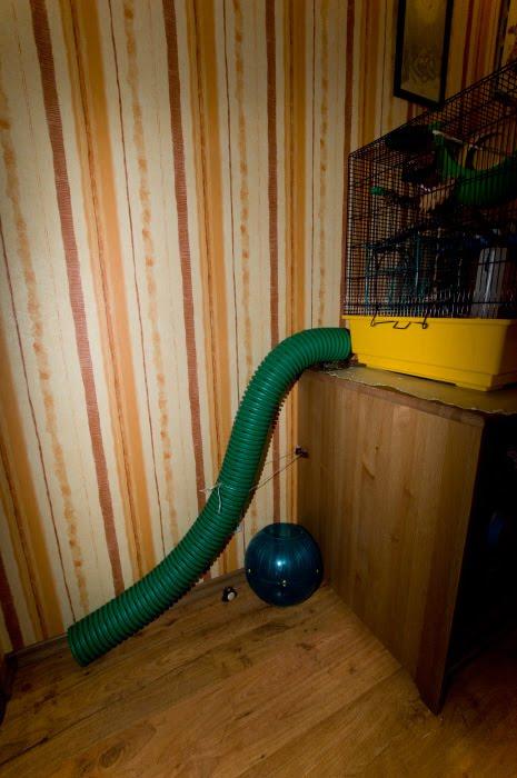 лестница тоннель для дегу pipe for Octodon degus Автор Демидов Игорь