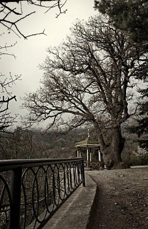 pavilion oak дуб беседка край обрыв Демидов Игорь