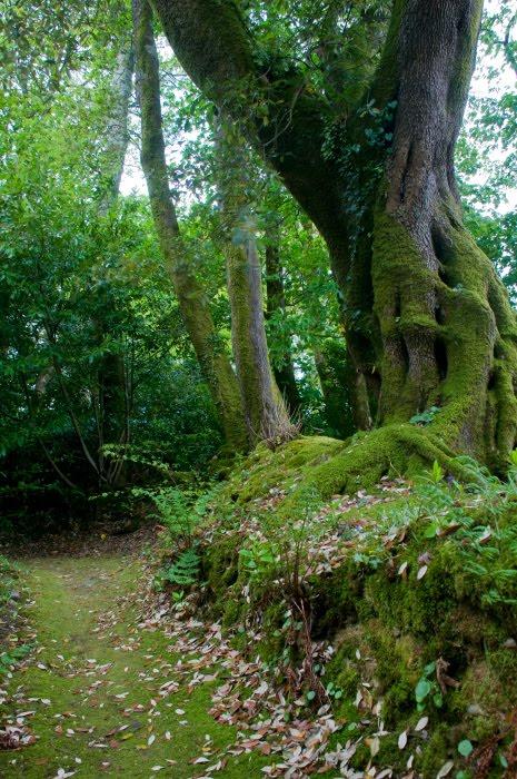 Тропа мох деревья стволы листья зелень автор Демидов Игорь green path moss grass tree truncks