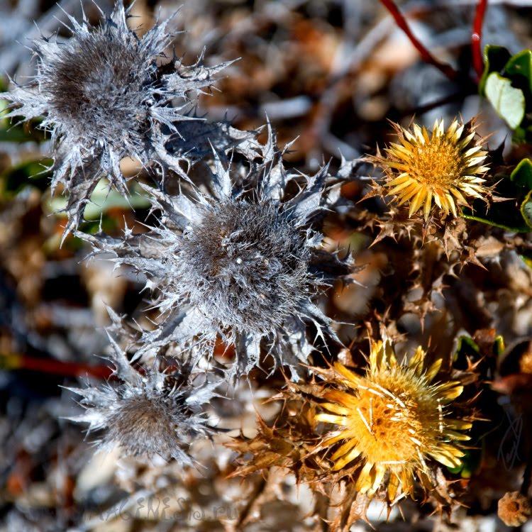 dead and alive flowers живые и мёртвые цветы автор Демидов Игорь