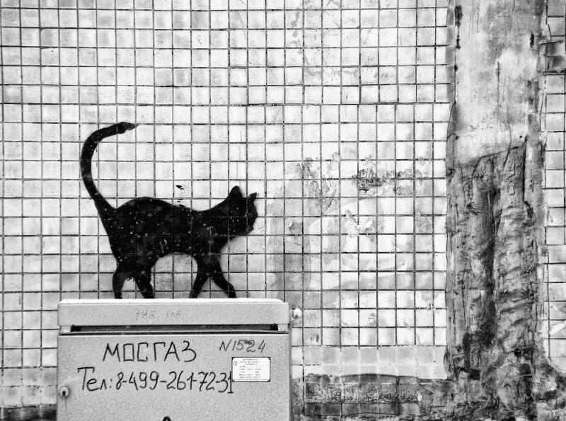 граффити картинка черная кошка идущая вдоль стены автор фото ДЕмидов Игорь уличное искусство граффити graffiti street art ural painting black cat walking along the wall