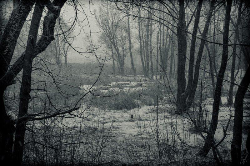 dark trees under snowfall тёмные деревья и снегопад автор Демидов Игорь