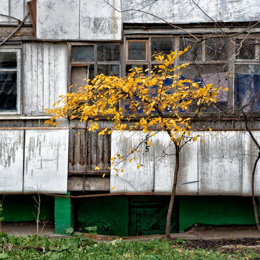 золотые листья серые стены автор Демидов Игорь golden leaves grey walls