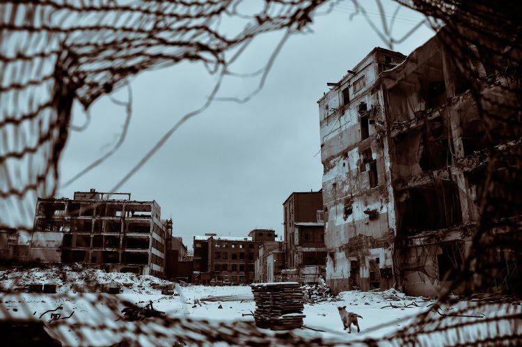 руины здание собака снег зима холод автор Демидов Игорь snow ruins building dog winter cold