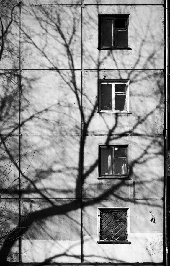 окна ветви тени автор фотографии Демидов Игорь branches shadows windows urban