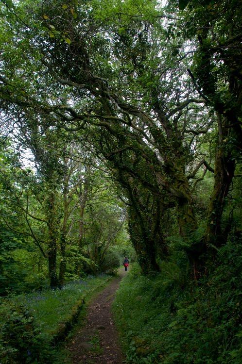 magical forest giant trees small path волшебный лес гигансткие деревья  маленькая тропа автор Демидов Игорь