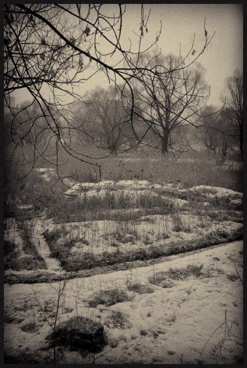 Старые деревья и следы на снегу old trees and traces on snow