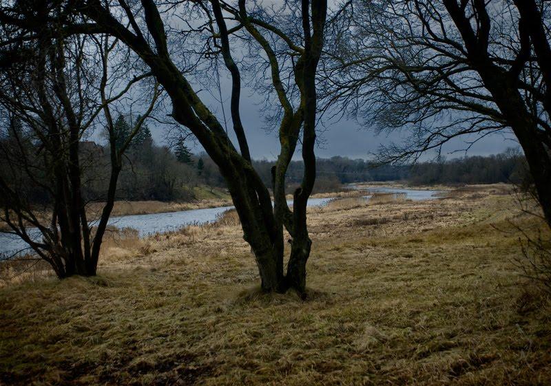 yellow grass naked trees evening light желтая трава голые чёрные стволы деревьев река автор Демидов Игорь