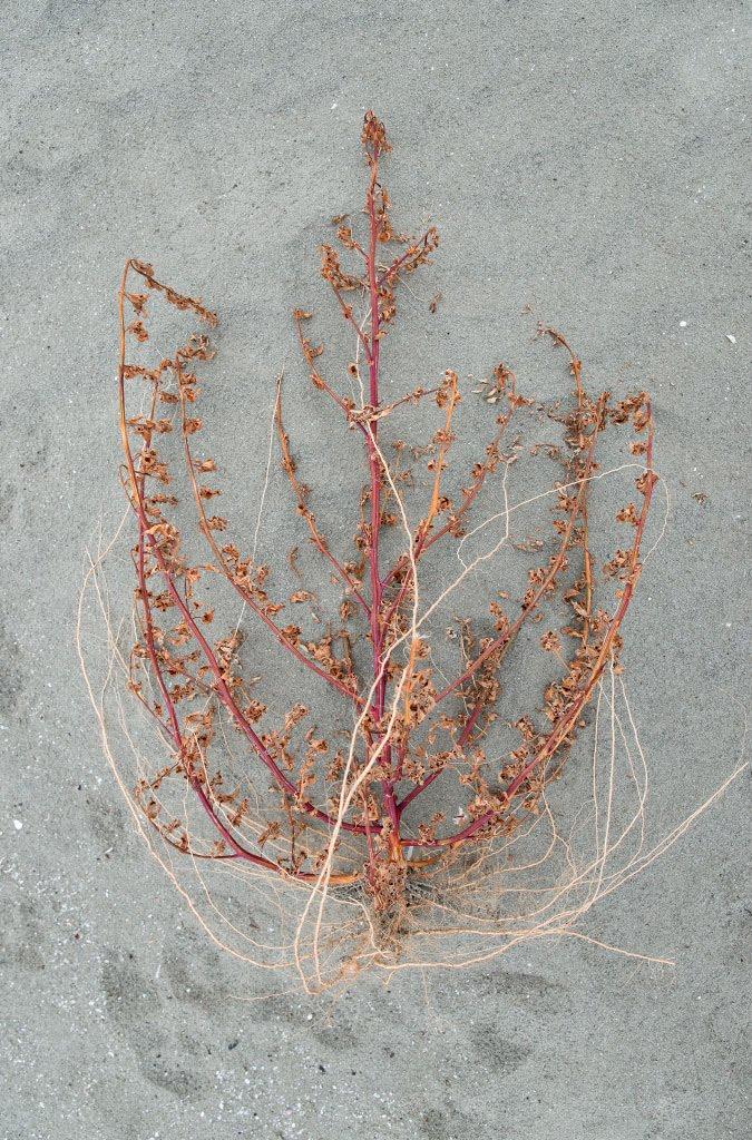 Анатомия мёртвого дерева