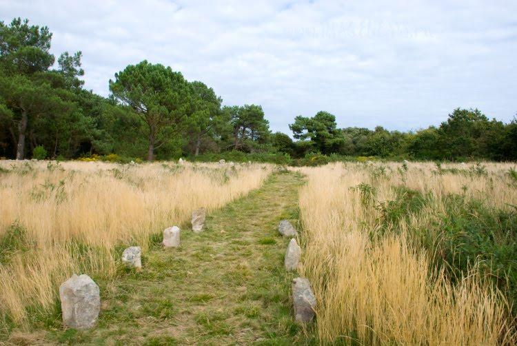 old path along the dry grass to the forest старый путь сквозь сухую траву к лесу автор Демидов Игорь