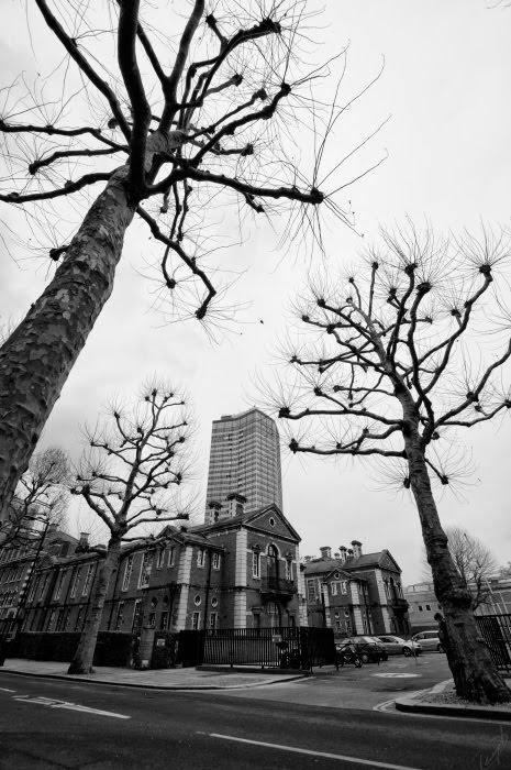 Огромные одуванчики деревья в Лондоне узловатые ветви автор Демидов Игорь giant dandelion London street trees