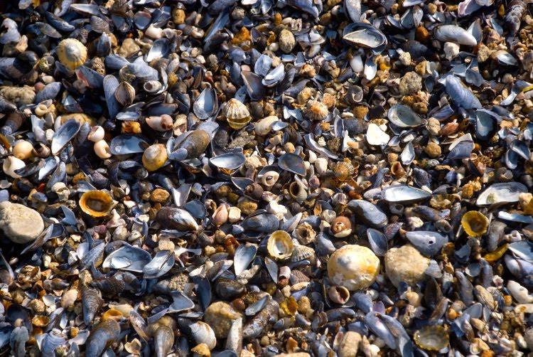 empty shells пустые ракушки автор Демидов Игорь