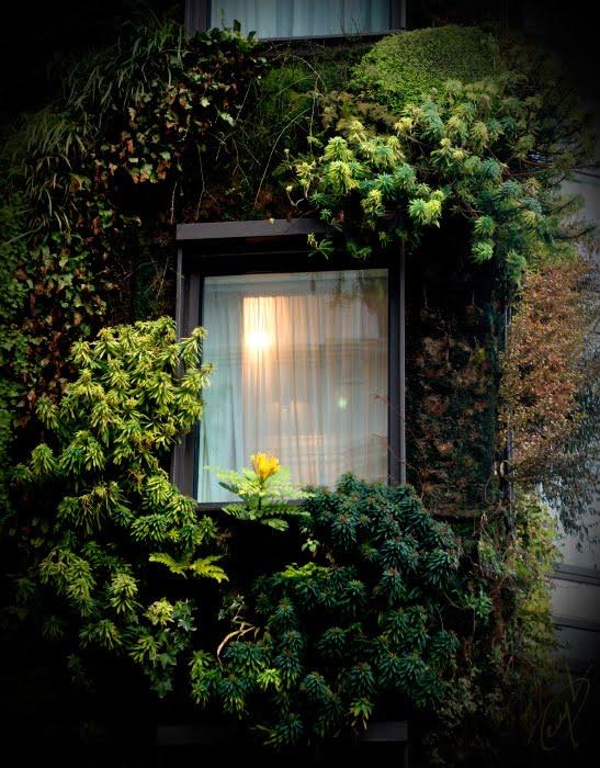 свет окно зелень растения автор демидов игорь green window light plants wall