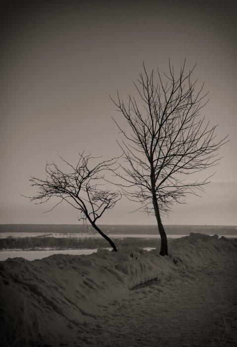 деревья обрыв зима снег сугробы обрыв река автор Демидов Игорь winter snow river steep two trees
