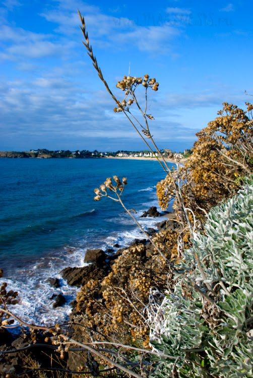 Brittany rocks with dry flowers скалы Бретани с сухими цветами автор Демидов Игорь