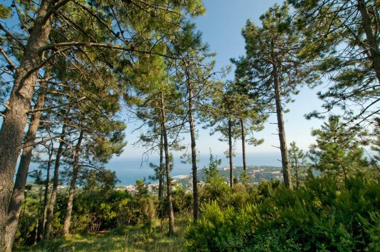 Зелёная поляна сосны можжевельник горы Бейгуа Аренцано автор Демидов Игорь Beigua Arenzano green glade forest