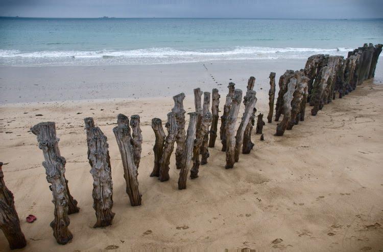 wooden breakwater dead trees волнорезы из мёртвых стволов деревьев автор Демидов Игорь