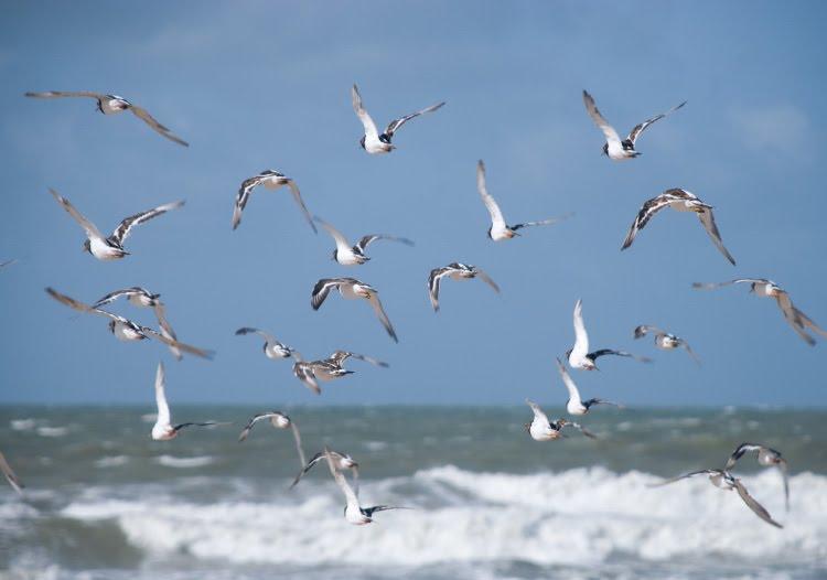 birds flying over ocean стая птиц над океаном автор Демидов Игорь
