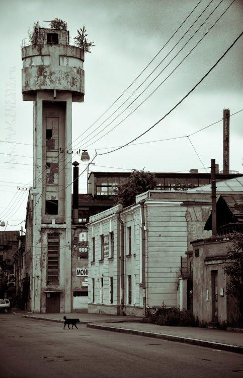 old industrial harbour zone dog on patrol старая портовая пром зона собака бежит Автор Демидов Игорь