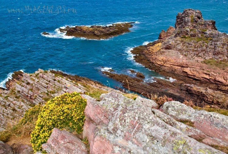 flowers on sea cliffs цветы на прибрежных скалах автор Демидов Игорь