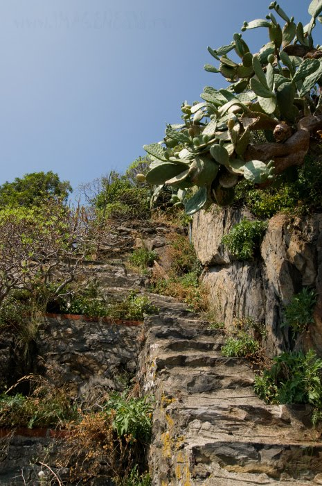 тропа ступени кактусовые заросли автор Демидов Игорь path through cactuses steps stairs