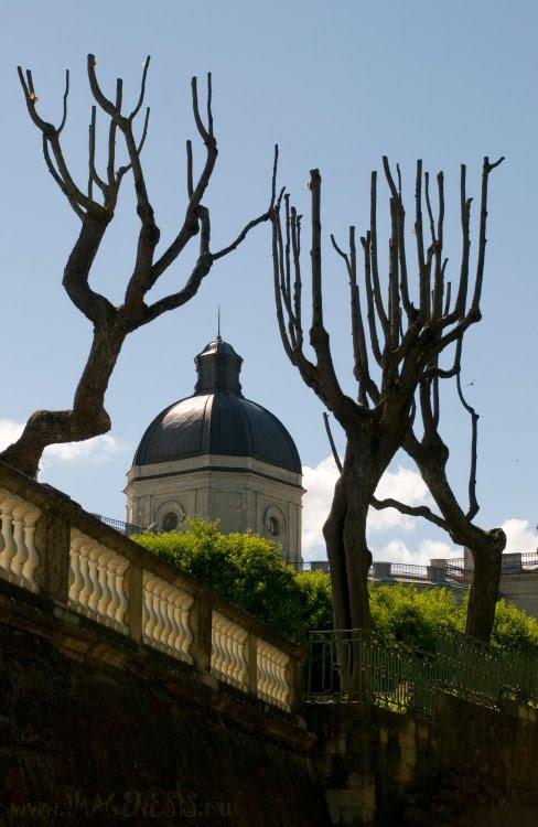 palms of trees Gatchina palace руки деревьев укрывают павловский замок автор Демидов Игорь